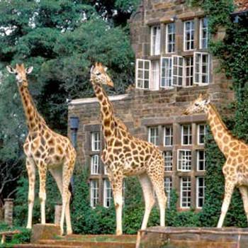 Image of The Giraffe Manor